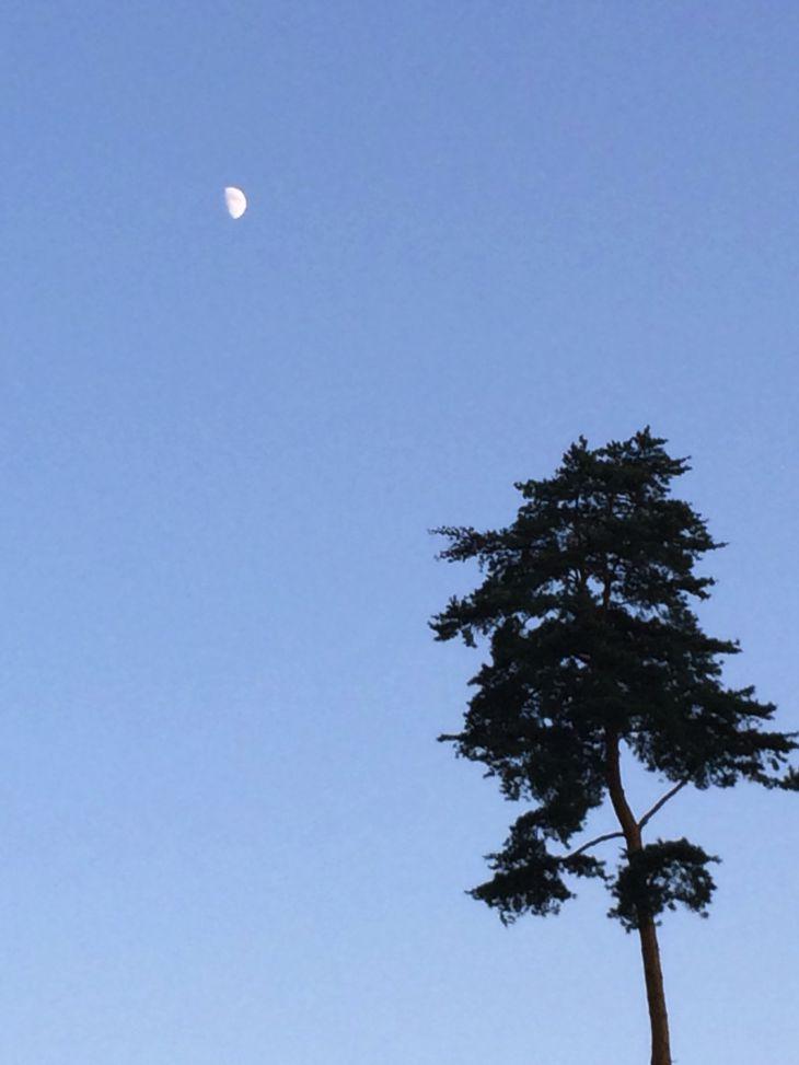 夕暮れの月.jpg