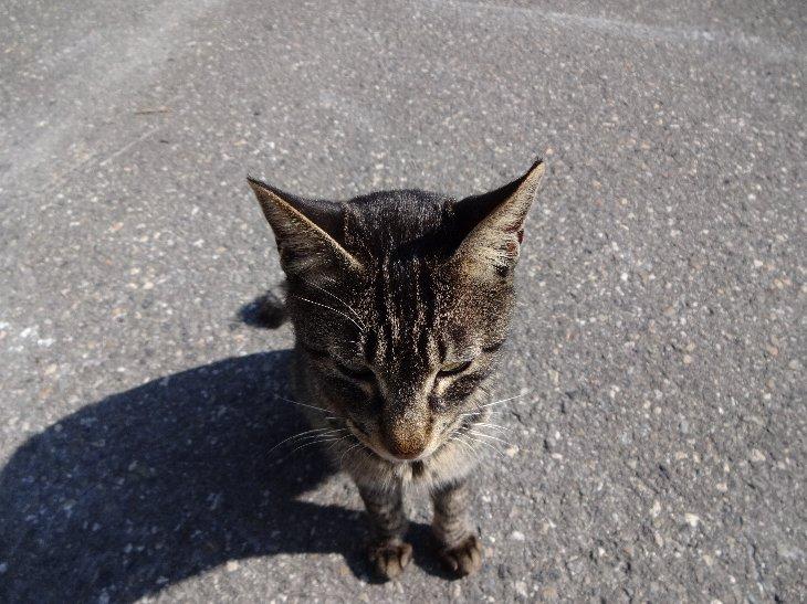 大町で会った人なつっこい子猫.jpg