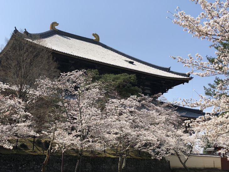 東大寺を講堂跡より望む.jpg