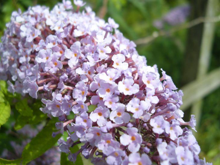 英国の花01.jpg