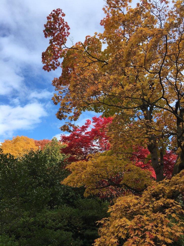 錦繍の秋.jpg